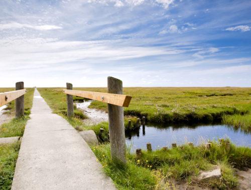 Weg durch Salzwiesen im Wattenmeer National Park Schleswig-Holstein - Foto Oliver Hoffmann