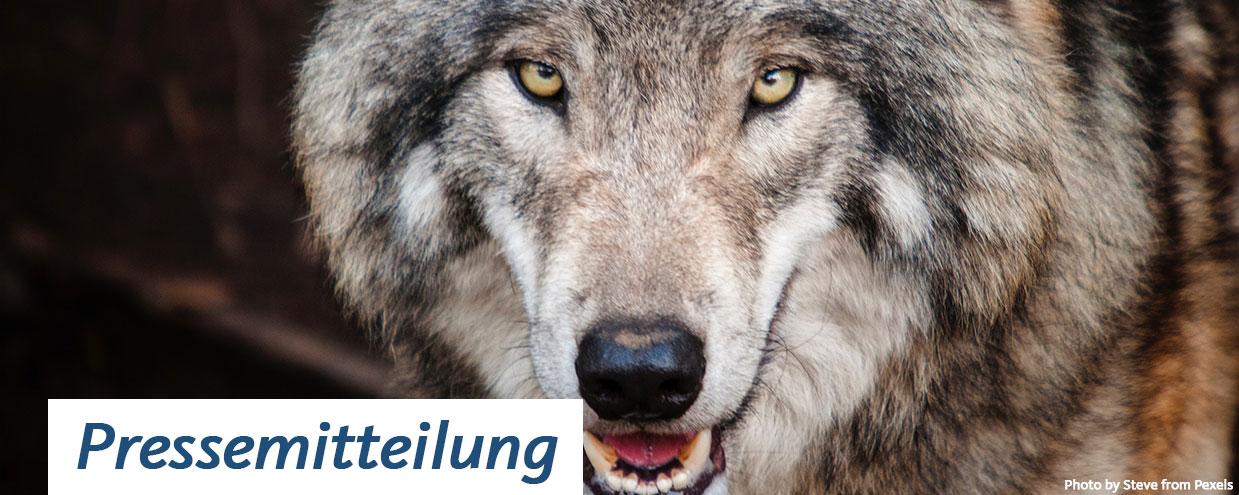Pressemitteilung Wolf